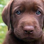 puppy-sad-face